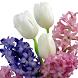 Hyacinths Jigsaw Puzzles by filsosoev
