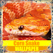 Corn Snake Reptile Wallpaper by Tirtayasa Wallpaper
