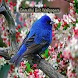 Beautiful Bird Wallpapers by Applications 4 All