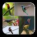Master Kicau Kolibri 4 Jenis by JumatBerkah Dev