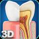 My Dental Anatomy by visual 3d science