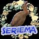O Canto da Seriema (Cariama cristata) by Raja Burung App