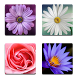 Flower Memory - Free by Funny Addicting Games