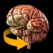 Brain 3D Anatomy by Catfish Animation Studio