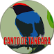 Canto do Tangará tropeiro by legend of bird