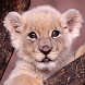 baby lion wallpapers free by ashwin.gamedev