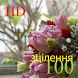 100 зцілення HD by KenMac Holdings Limited