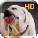 Dog Licks Screen Live Wallpap by Bastiaan Mastix Corp