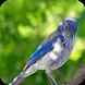 Bird Sounds Relax & Sleep by mathias stavrou