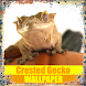 Crested Gecko Reptile Wallpaper by Tirtayasa Wallpaper