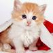 Kedi Bakımı by Hediye Temelli