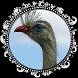Seriema ave com canto mais lindo by Raja Burung App