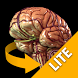 Brain 3D Anatomy Lite by Catfish Animation Studio