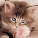 Lovely Cats Cute Wallpaper by Wallpaper3mpire