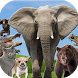Animales Sonidos y Fondos by AppsLobia