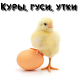 Куры, гуси, утки by knigivasilisi