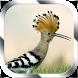 Kicau Burung Masteran by Jayakerta Bizz
