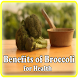 The Benefits Of Broccoli by Lab Enthronet