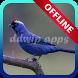 Canto Sanhaço Frade Offline 2017 by ddwip apps
