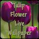 Tulip Flower Live Wallpaper