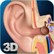 My Ear Anatomy by visual 3d science