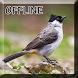 Master Burung Kutilang Gacor by Detarp Creative