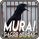 Master Burung Murai Gacor Nembak by JATstudio