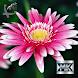 Декоративные цветы by МобКиоск1