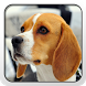 Beagle Theme - Nova/ADW/GO by Fun Apps and Themes