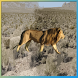 Lion Hunter by VCR Game