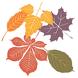 Autumn Leaves by MacKenzie Mickelsen