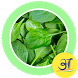 Tasty Palak Spinach Recipes by Apps Bharat