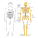 Human Anatomy and Physiology by Knowledge App Technologies