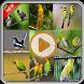 Birdsong Mp3 Offline