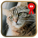 Cat World Live Wallpaper by BusaccaBuskin