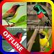 Master Kicau Burung Lengkap Offline by ddwip apps