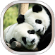 Panda Live Wallpaper by HQ Awesome Live Wallpaper