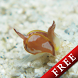 Cowfish Gastropteridae Free by DMF, Inc.