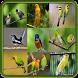 Master Birdsong Mp3 by Mayn Creators