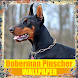 Doberman Pinscher Dog Wallpaper by Tirtayasa Wallpaper