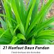 Manfaat Daun Pandan by rondiahndroid