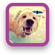 Cool Dog Wallpapers by SGA Media