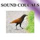 นกกะปูด เสียงต่อนก by sansertan