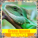 Green Iguana Reptile Wallpaper by Tirtayasa Wallpaper