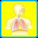 Human Body Anatomy for Kids 2 by Zodinplex