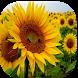 Energias Positivas Plantas by Context Apps