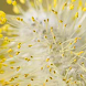 APCYL: Alergia al polen CyL by Daniel Hernández de la Iglesia