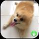 Dog Names: Dog Breeds Games by Yuyu School