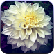 Garden Flower Live Wallpaper by STECHSOLUTIONS
