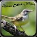 Kicau Burung Ciblek by Pram App